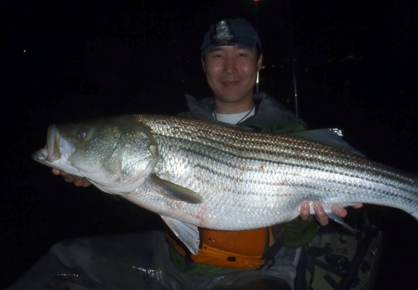 RVA Striper 38 inches caught kayak fishing