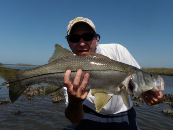 Nature Coast Snook