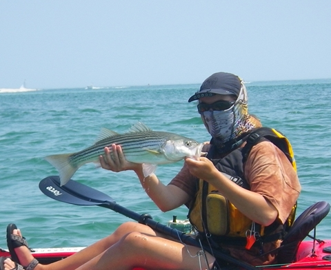 striper caught kayak fishing