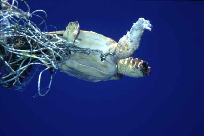 turtle_fishing_line