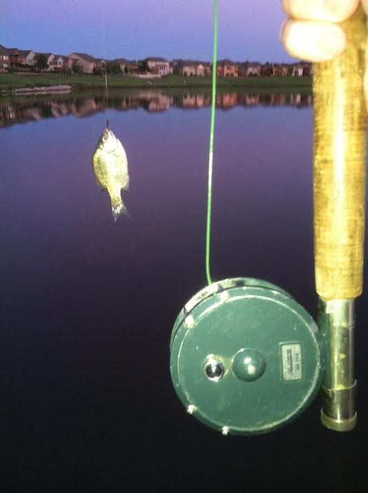 tiny fish big reel