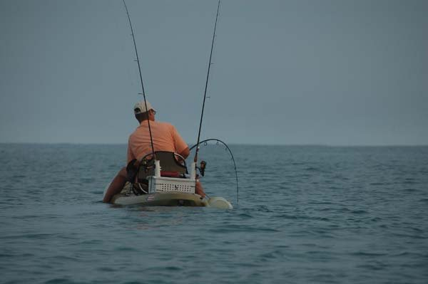 tarpon next to the kayak