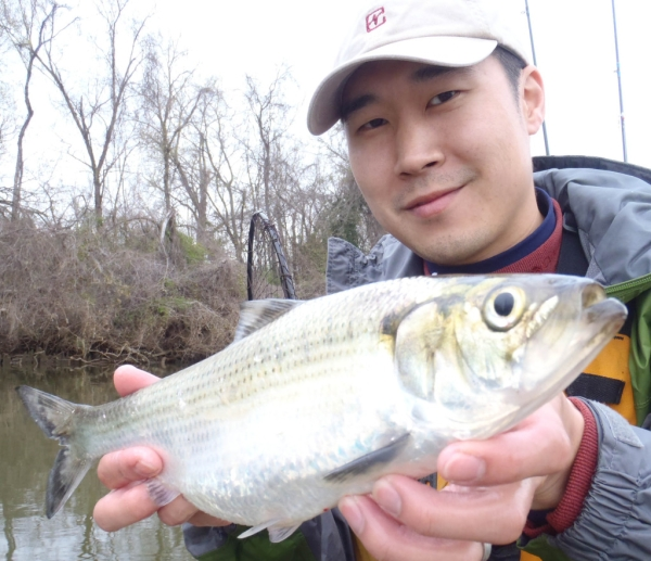 Rob Choi with shad caught on the James River