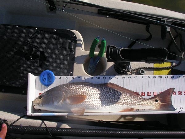 third redfish of the day