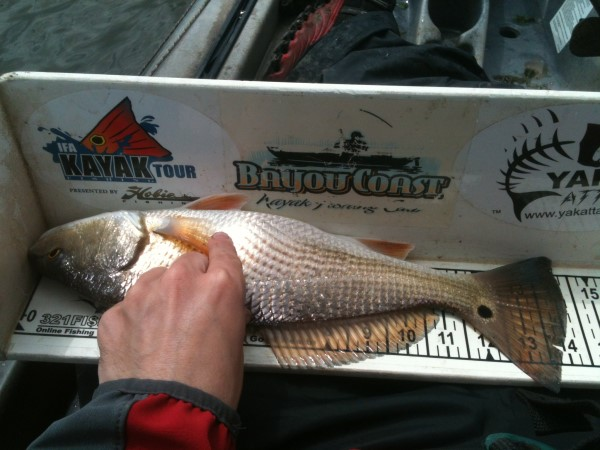 redfish on a measuring board
