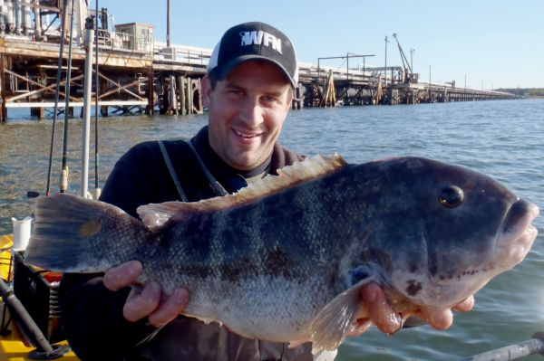 "Justin's new personal best 22"" Tautog"