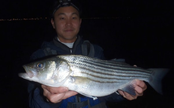 Charlie Schoolie Striper kayak fishing