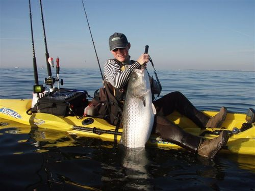 Stripers on the run for Fishing on long island