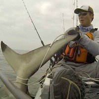 Rob Choi huge shark kayak fishing