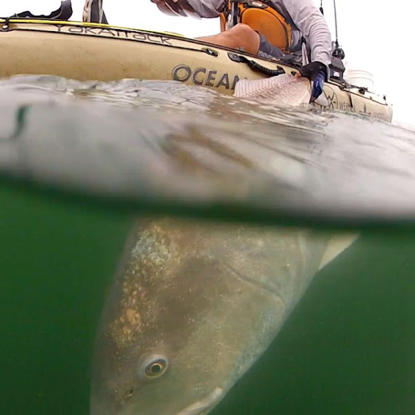 under water redfish release