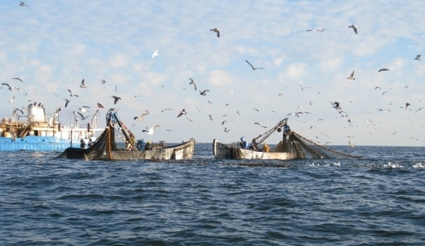 Great Day for Menhaden Management