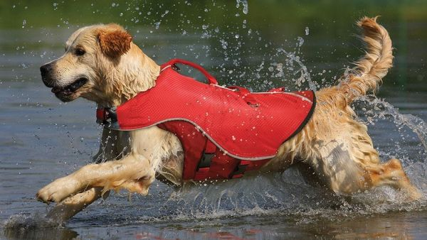 Five Great PFD's For Dogs