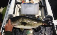 25.5 in 	Lake Jackson, Tallahassee, Florida, USA 	19-April-2012 	Allen Justus