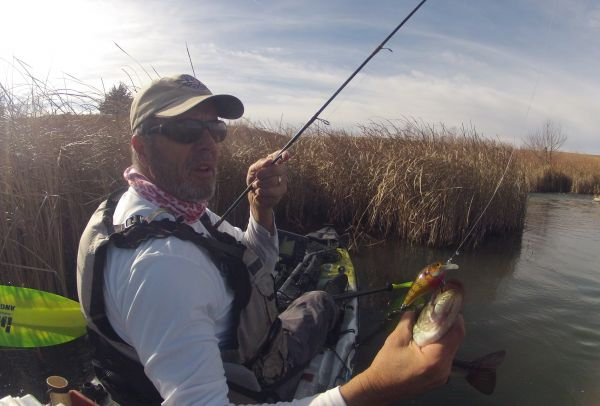 Cumberland Sunny Crank Bait does the trick in cold water