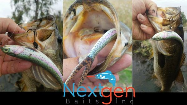 Yakangler Mailbox: Nextgen Baits Inc. Wounded Rattle Shad Soft Plastic Lure Collection