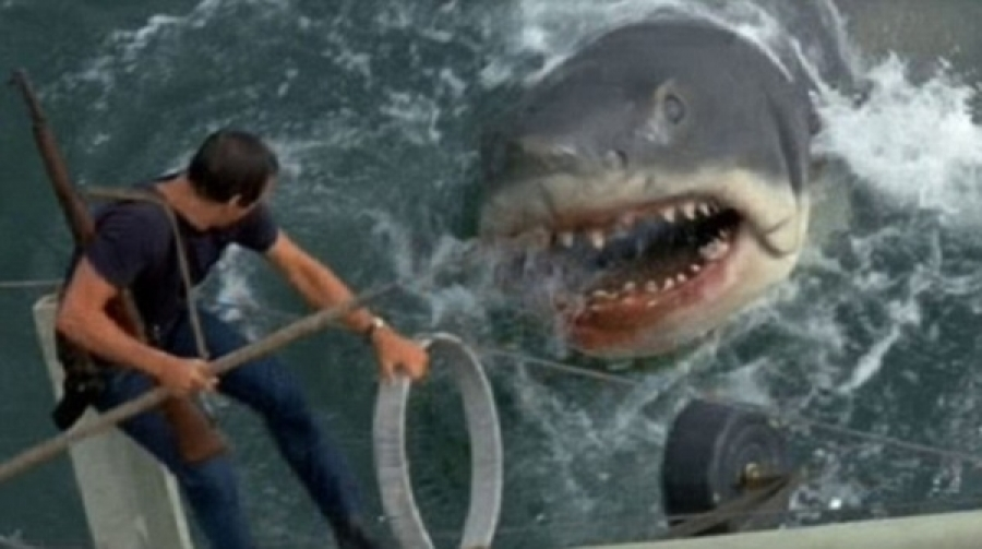 Shark Drags Kayak Fisherman Out To Sea