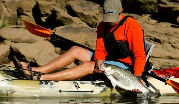 Kayak fishing for stripers