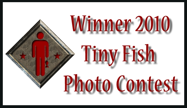 Tiny Fish Photo Contest Winner