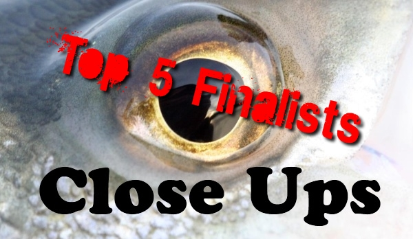 Closeups Top 5 Finalists