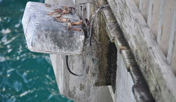 The Dangers of Discarded Fishing Line