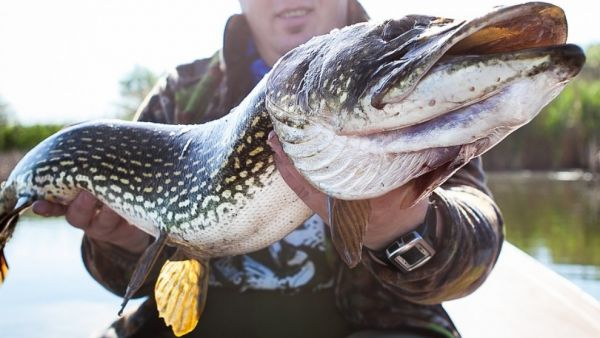 Tips For Catching Big Fish From Your Kayak