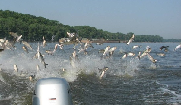 The Great Asian Carp Invasion