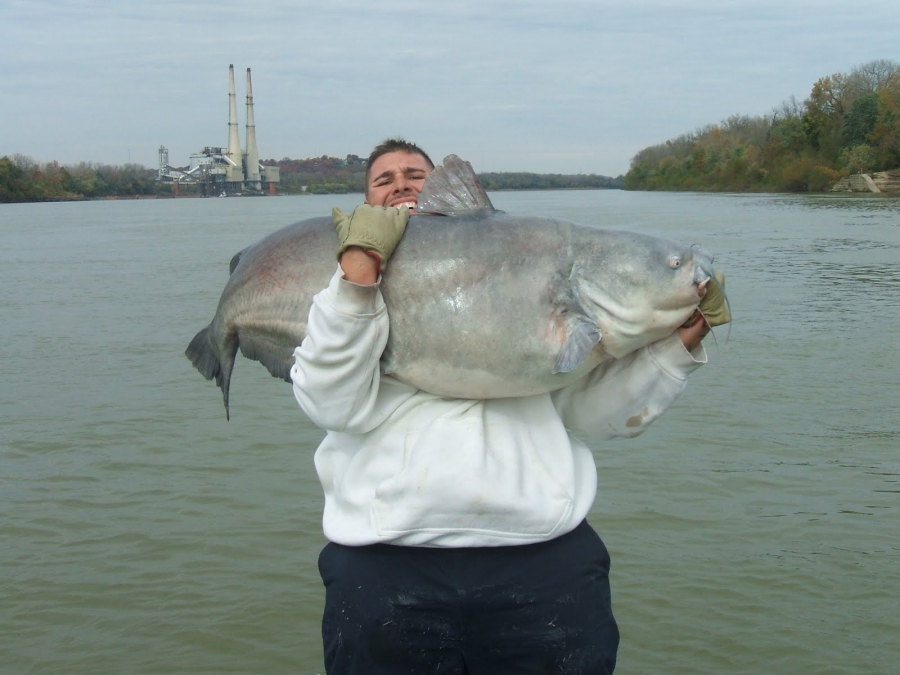 Huge cat from the ohio for Ohio river fish