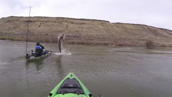Most Impressive Kayak Angling Catches Caught On Camera