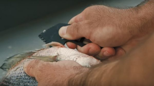 Processing Your Own Fish