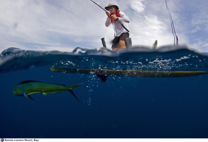 Hobie pro angler 14 fishing kayak review for Angler fish for sale