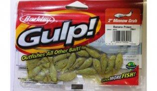 gulp minnow grub