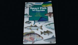 sportfish of florida