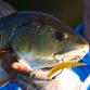 Redfish caught on a Slayer Inc. SSB