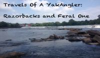 Travels of a YakAngler - Razorbacks and FeralOne