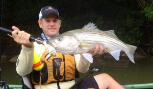 Hardcore Swimbait Stripers, Part II