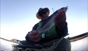 Stripers on the Wando River