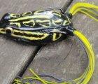 KVD Sexy Frog